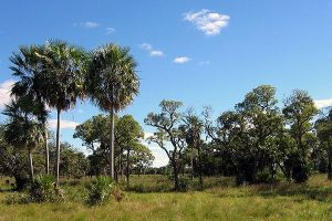 """Chaco Boreal Paraguay"". Licensed under Creative Commons Attribution 1.0 via Wikimedia Commons"
